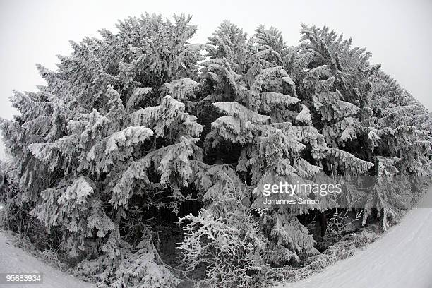 Snow and frost covers a forest on January 11 2010 near Diessen am Ammersee Germany Depression 'Daisy' brought havoc in Germany as treacherous winter...