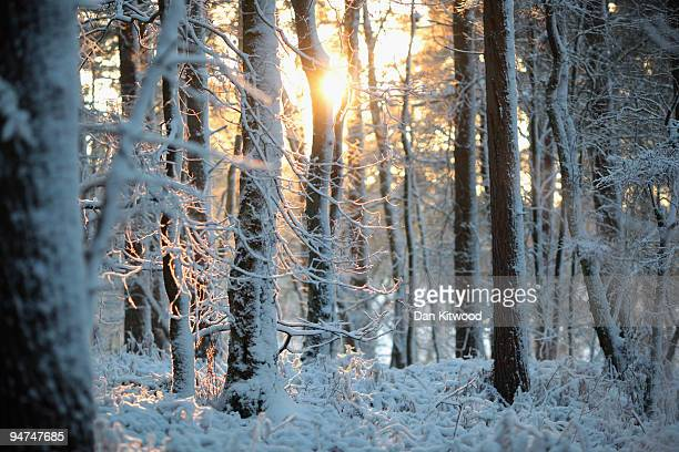 Snow blankets woodland in the South Downs National Park on December 18 2009 near Coldharbour England Heavy snow fell across much of south east...