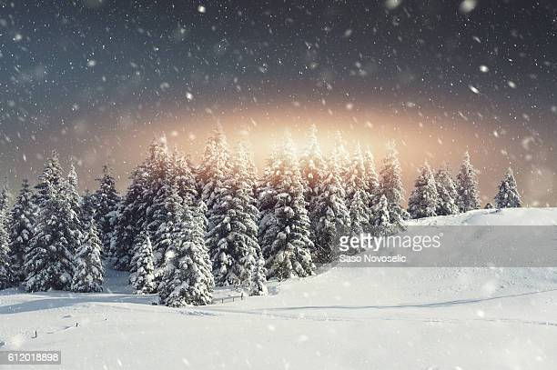 Snow blizzard and the sunrise