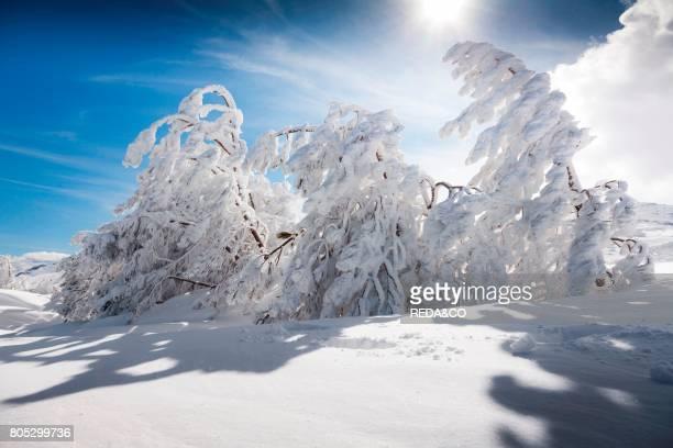 snow Bruncuspina Gennargentu Fonni Sardinia Italy