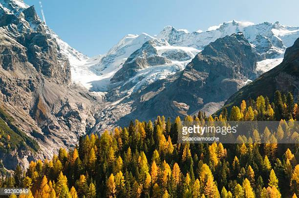 Snow capped mountains with golden flowers in the foreground