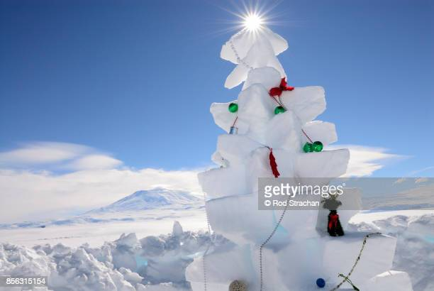 Snow Christmas tree