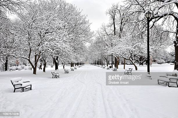 Snow covered benches and trees in Washington Park