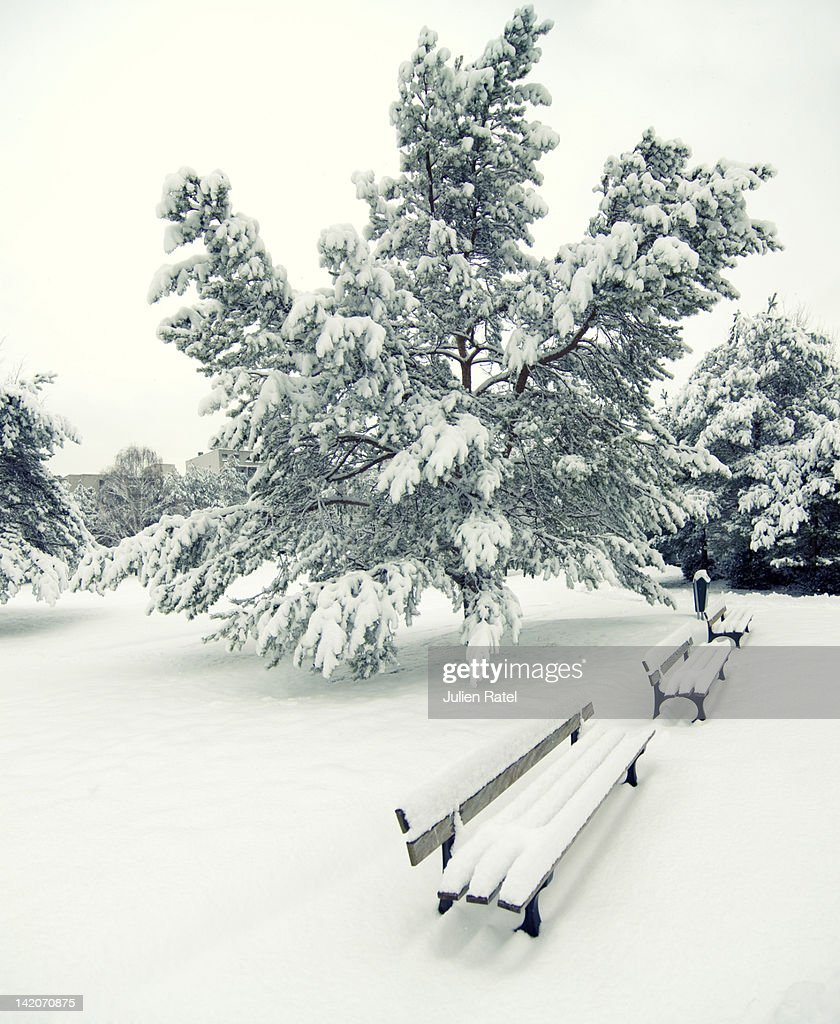 Snow covered benches : Stock Photo