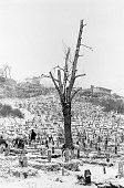 Bosnia Sarajevo December 1995 A snow covered cemetery surrounds a tree stripped bare by people collecting firewood to keep warm during the harsh...