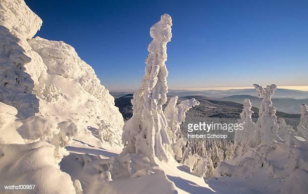 Snow covered forest, Grosser Arber, Bavarian Forest, Germany