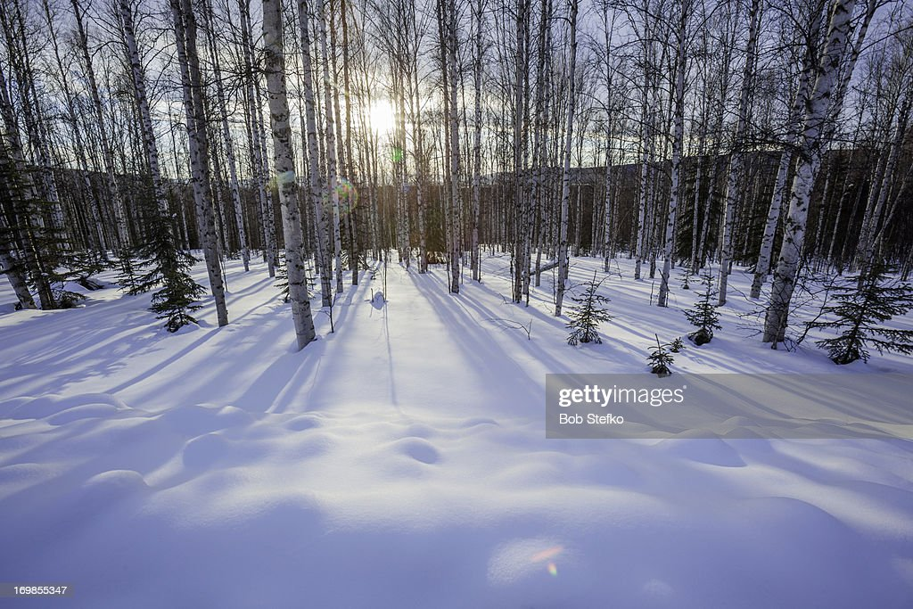 Snow covered forest with afternoon sun