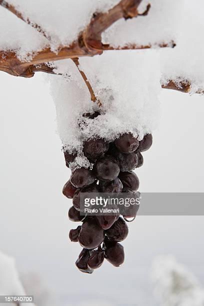 Snow Covered Grape