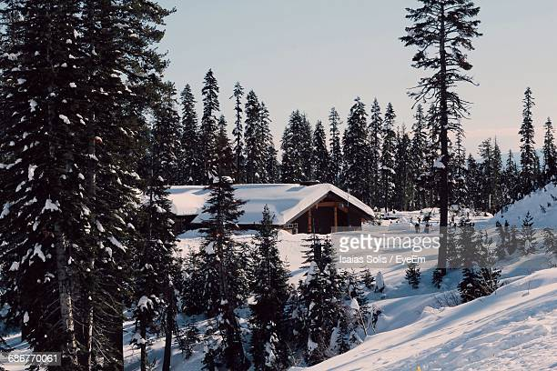Snow Covered House Amidst Trees