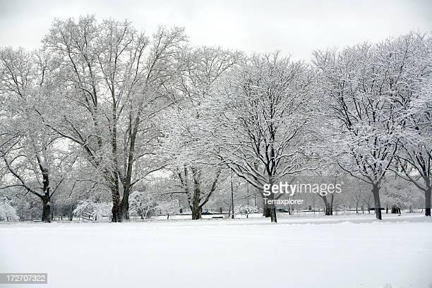 Parc de neige