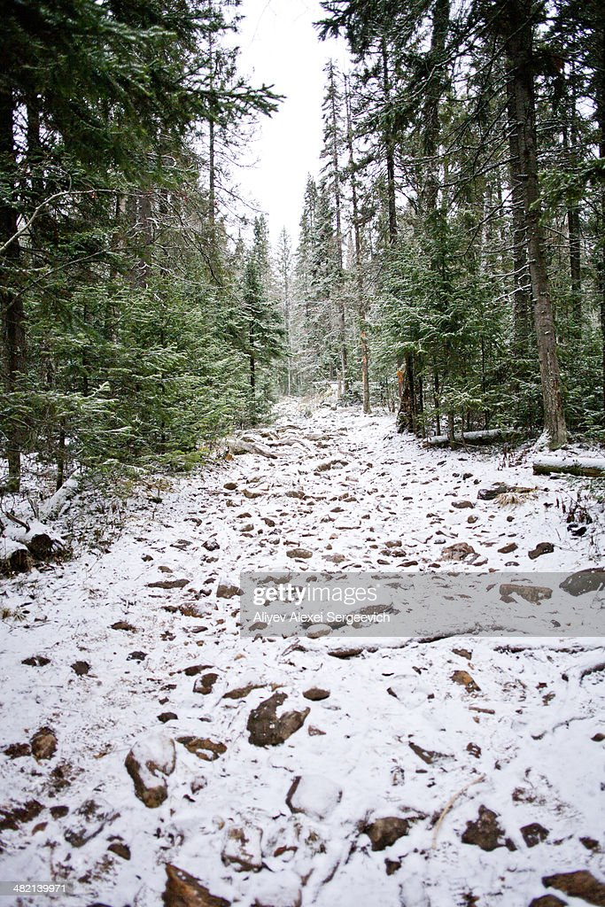 Snow covered path in rural forest