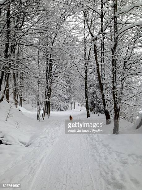 Snow Covered Road Along Trees