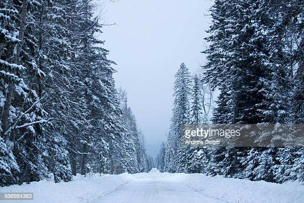 POV of snow covered road in evergreen forest.