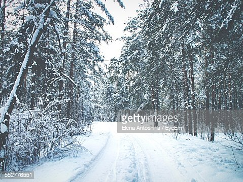 Snow Covered Road In Forest