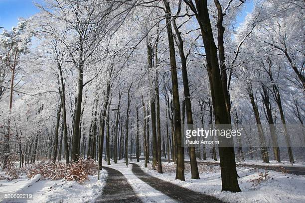 Snow covered the trees in Netherlands