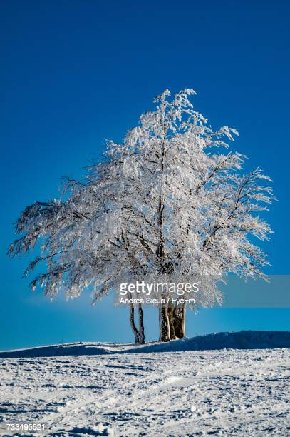 Snow Covered Tree Against Clear Blue Sky