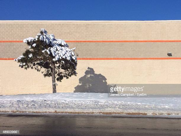 Snow covered tree against wall and blue sky on street