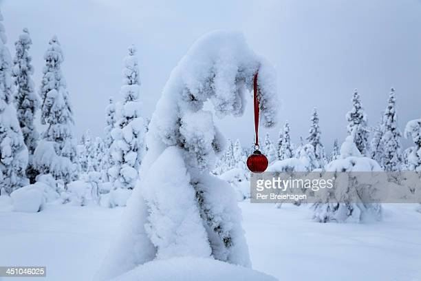 A snow covered tree and a red ornament