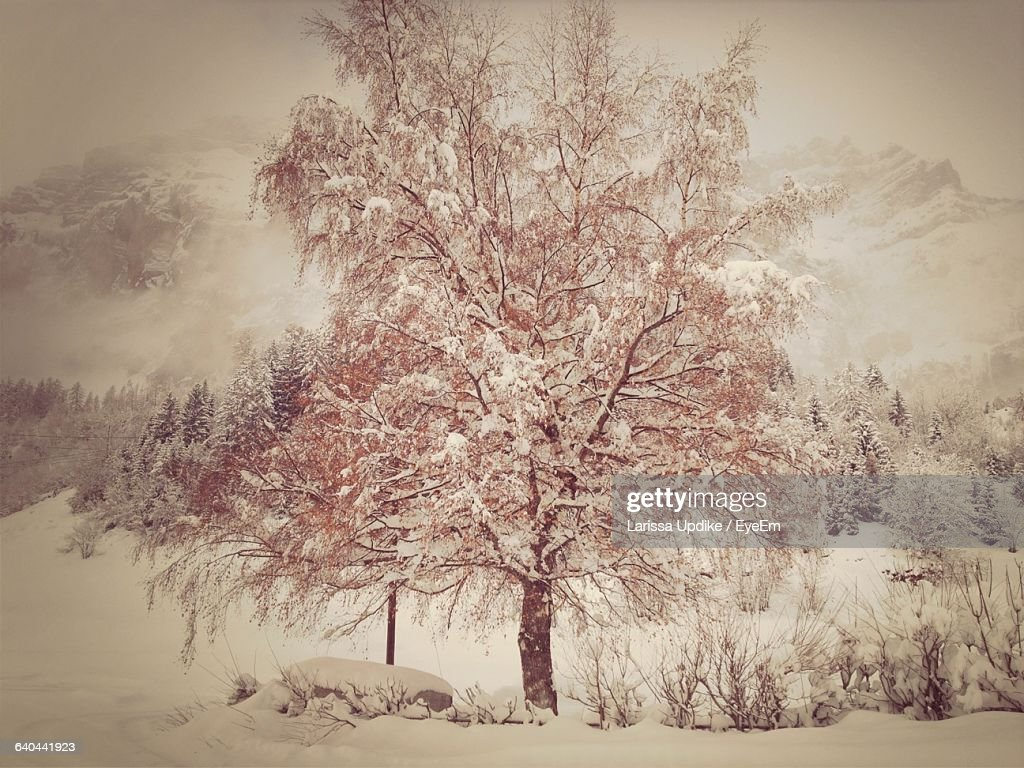 Snow Covered Tree And Plants On Field