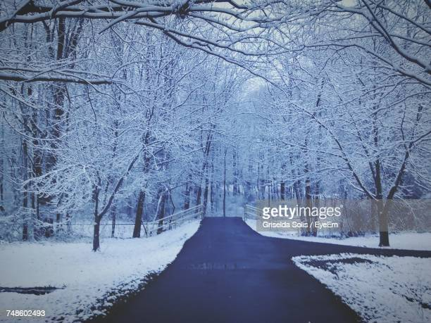 Snow Covered Trees Along Country Road