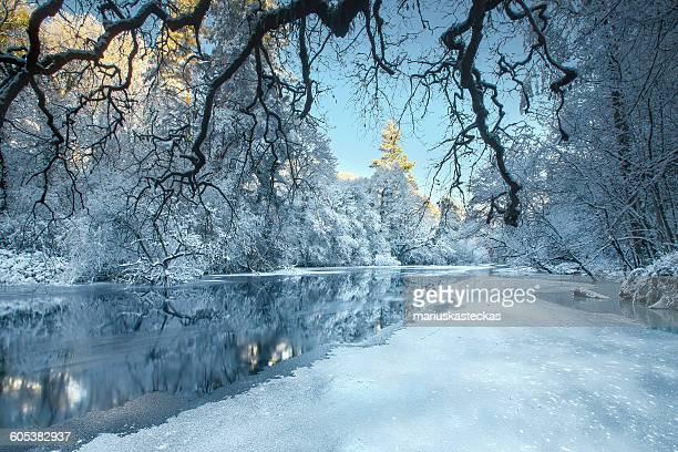 Snow covered trees along river, Cavan, Ireland