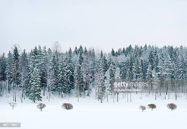 Snow covered trees and meadow