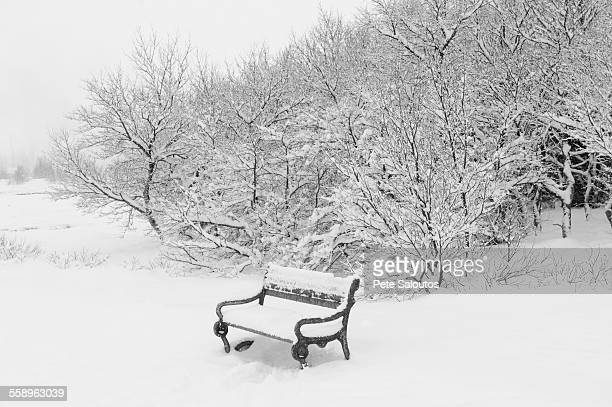 Snow covered trees and park bench, Reykjavik, Iceland