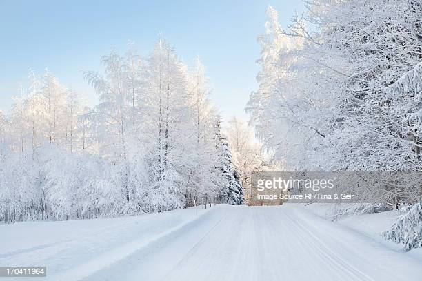 Snow covered trees and rural road