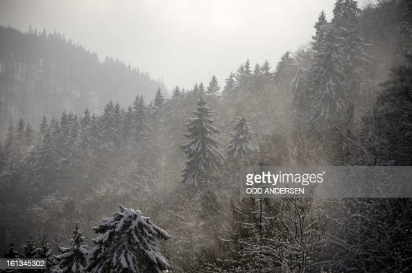 Snow covered trees are pictured after the cancellation of the FIS Ski Jumping World Cup individual large hill competition on the Muehlenkopfschanze...