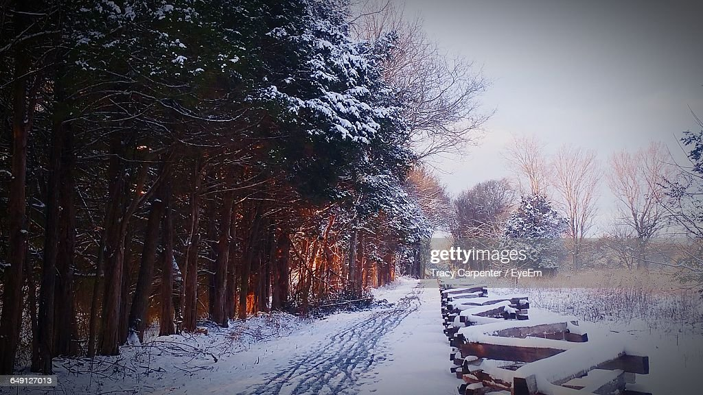 Snow Covered Trees By Footpath