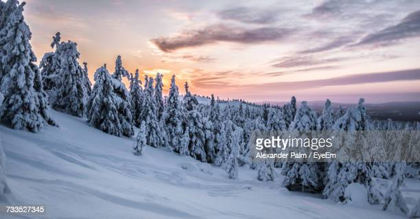 Snow Covered Trees In Forest Against Sky During Sunset