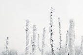 Snow covered trees in winter, close-up, high section