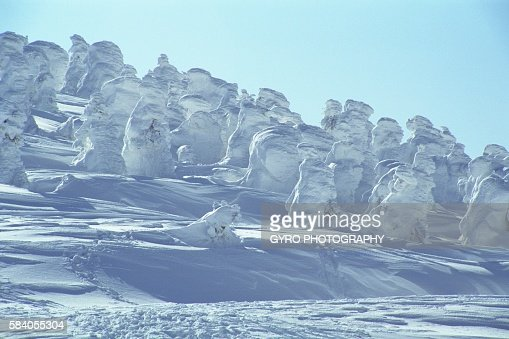 Snow Covered Trees on the Zoah Mountain Range, Yamagata Prefecture, Japan.