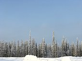 Snow covered arctic forest landscape