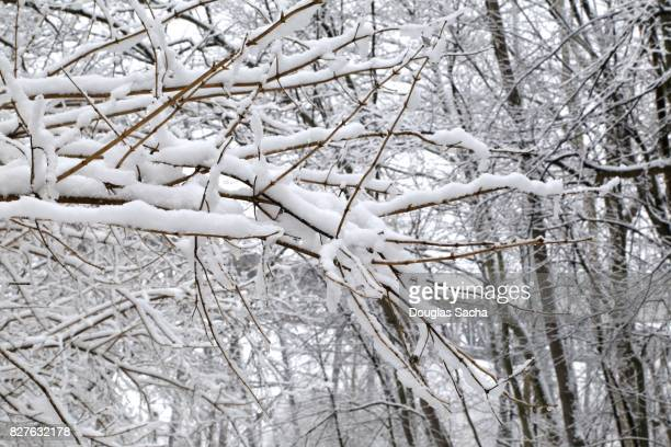 Snow covered wooded Landscape