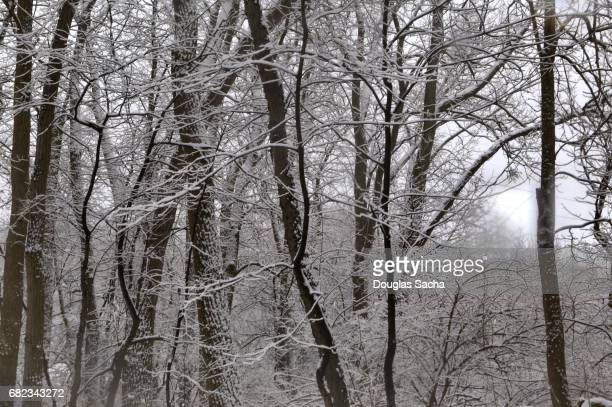 Snow covering in the forest