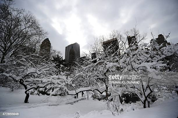 Snow covers trees after heavy snow falls in Central Park in New York January 27 2011 New York shut down two airports public schools and most city...