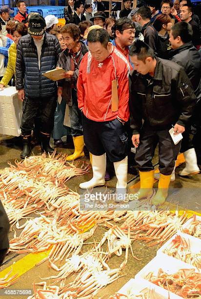 Snow crabs are seen for auction as its fishing season begins at Echizen Fish Port on November 6 2014 in Echizen Fukui Japan The fishing season begins...