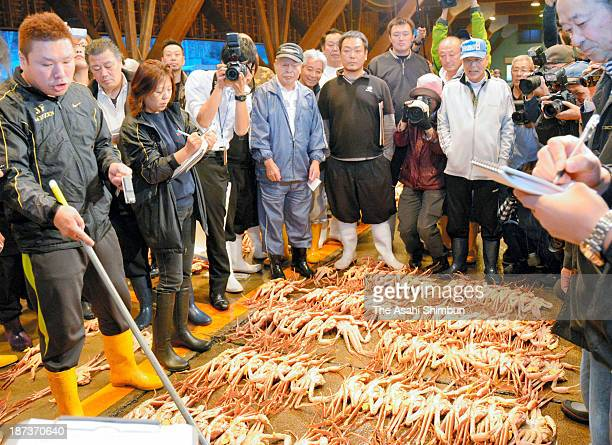 Snow crabs first auction of the season is held on November 6 2013 in Echizen Fukui Japan The catching season begins