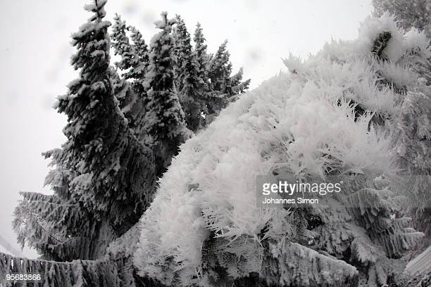 Snow crystals cover spruce trees on January 11 2010 near Diessen am Ammersee Germany Depression 'Daisy' brought havoc in Germany as treacherous...