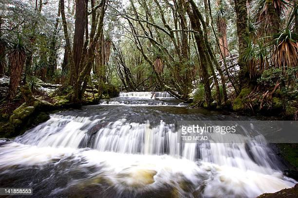 Snow dusted rainforest around Cephissus Falls in winter, Lake St Clair National Park, Tasmania, Australia