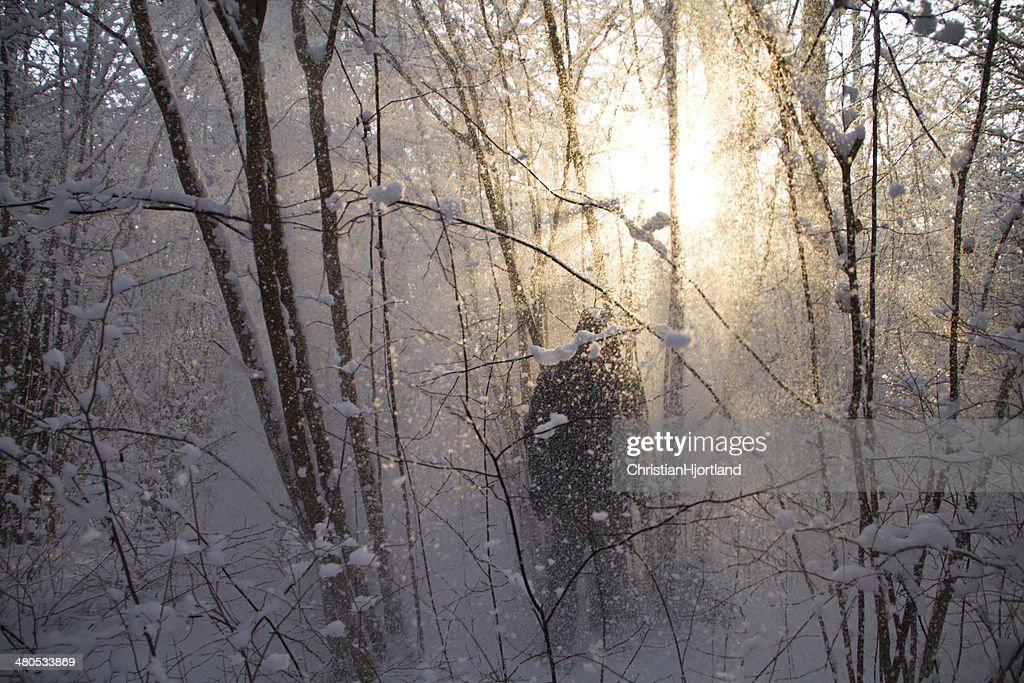 Snow falling in front of the sun : Stockfoto