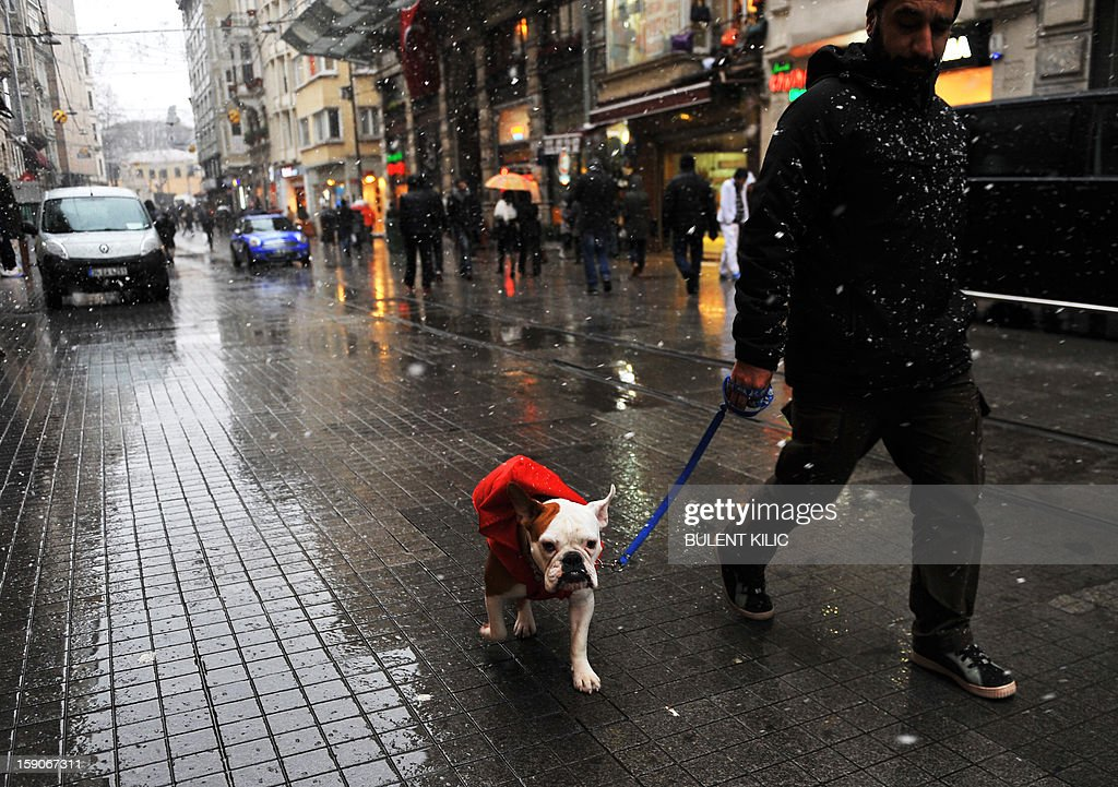 Snow falls as a man walks with his dog in downtown Istanbul on January 7, 2013. Heavy snowfall blanketed Turkey's commercial hub Istanbul, a city of 15 million, paralysing daily life, disrupting air traffic and land transport. Officials said the snow expected to continue until late tomorrow, according to the weather forecast.