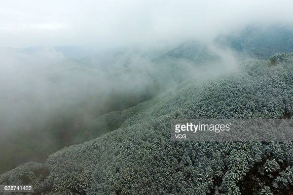 Snow falls on the forest on November 30 2016 in Qujing Yunnan Province of China