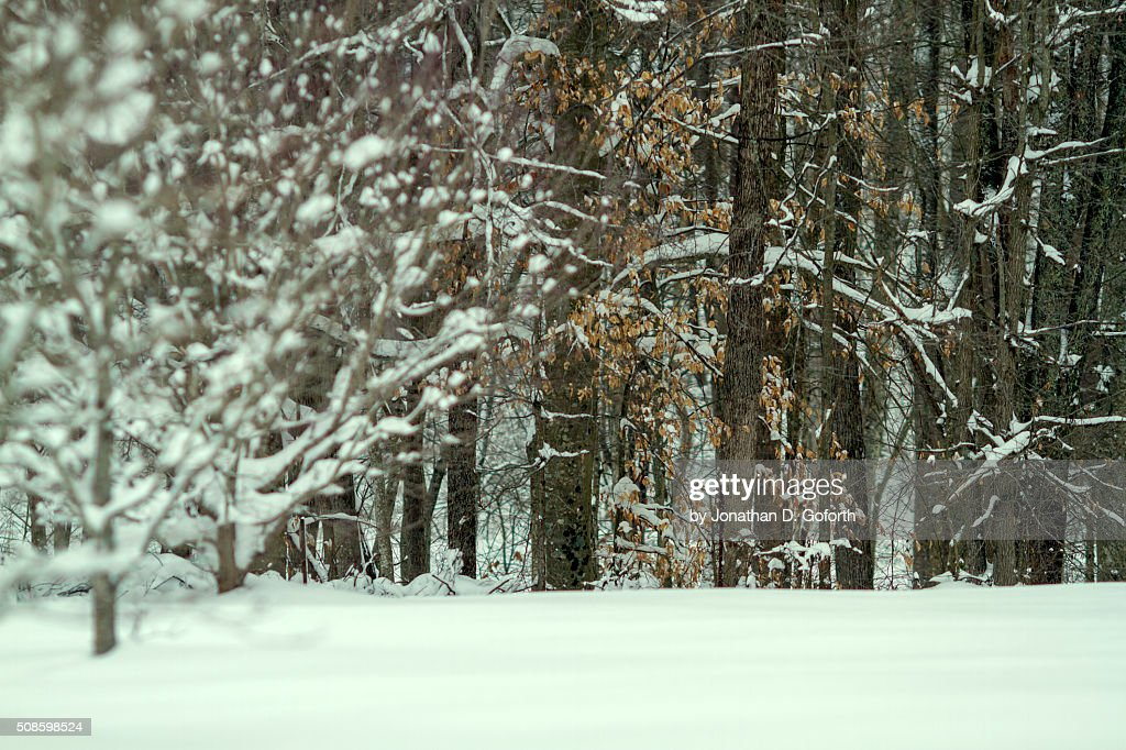 Snow Field and Trees : Stock Photo