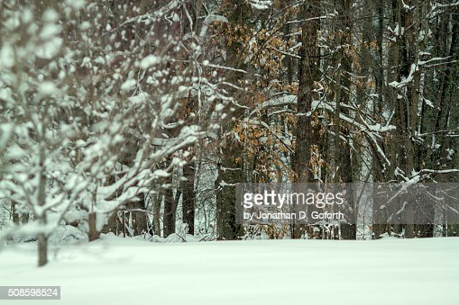 Snow Field and Trees : Foto de stock