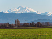 Snow geese flock migrate here every year for the winter,City of Bellevue,WA,USA.