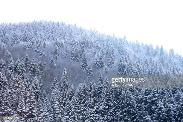 Snow in Winter Landscape