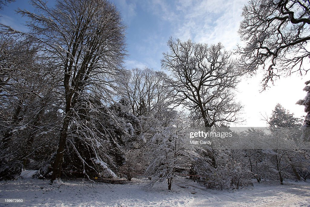 Snow is seen on trees at Westonbirt Aboretum on January 24, 2013 near Tetbury, England. According to forecasters, the UK is set to experience a thaw from the winter weather with rain, higher temperatures and high winds arriving from the south west tomorrow.