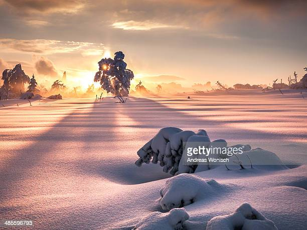 Snow Landscape at Sunset